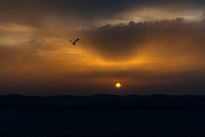 Twilight Sunset Sun Freedom Flying Evening Bird