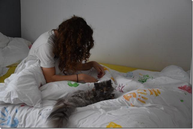 chat persan au levé
