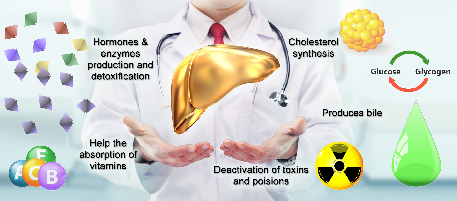 What Does The Liver Do And Why Is It So Important? - Buy Synthergine ...