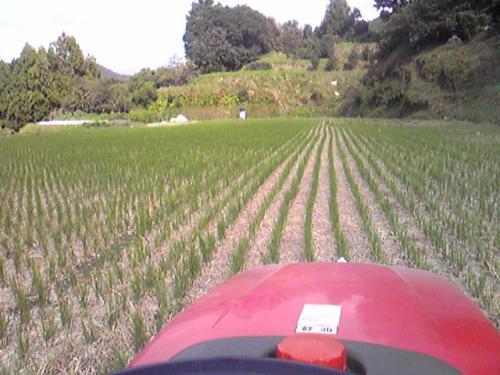 トラクターで稲刈り後の田んぼを耕す1