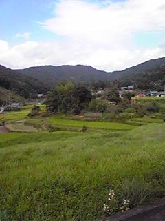 耕作放棄地と謎のうどんが抱える問題