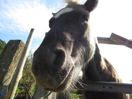 岡崎牧場 お馬さん