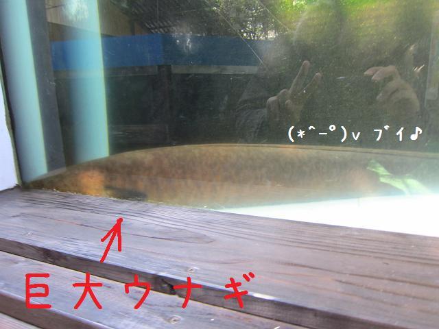 3日目!池田湖の大ウナギと竜一さん!