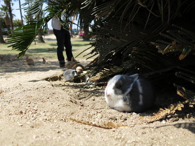 ウサギ日和 EP5 「ウサギ島でもアレを食べる、そしてウサギたちとの別れ」