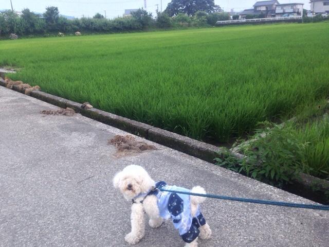 作品名「田んぼの脇の丸い犬」