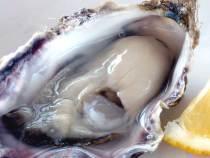 生牡蠣色(オイスターホワイト)