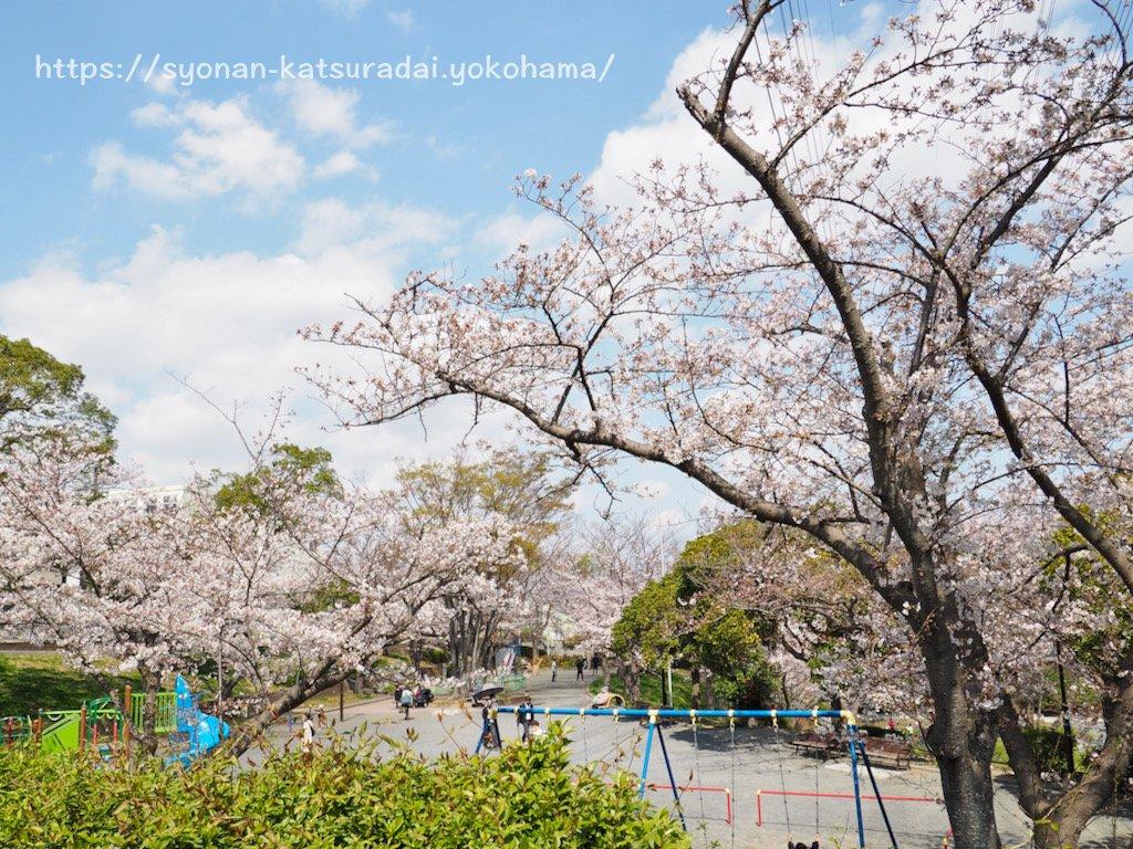 いの山東公園の桜