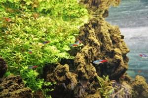 自然水景の魚