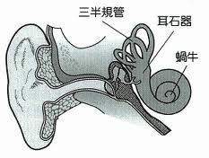 三半規管・耳石器