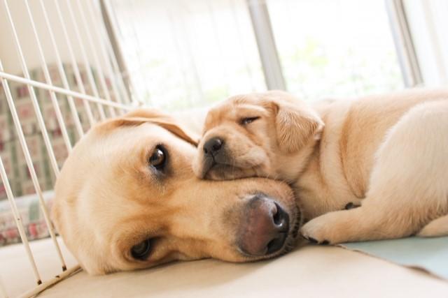 犬 腎 不全 末期 犬の急性・慢性腎不全、末期症状がでたときの余命は?