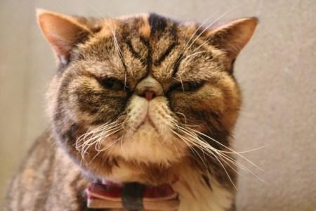 猫の腸閉塞の症状や原因と治療法【手術】や予防法