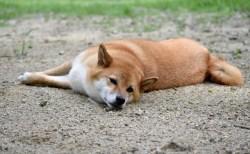 犬のトリコモナスの治療法や症状と原因【犬から人に感染?】