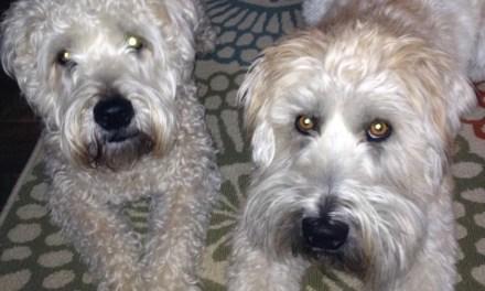Precious Pets Chloe + Seamus