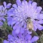 Bumblebee love