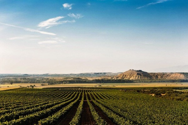 Navarra Wine