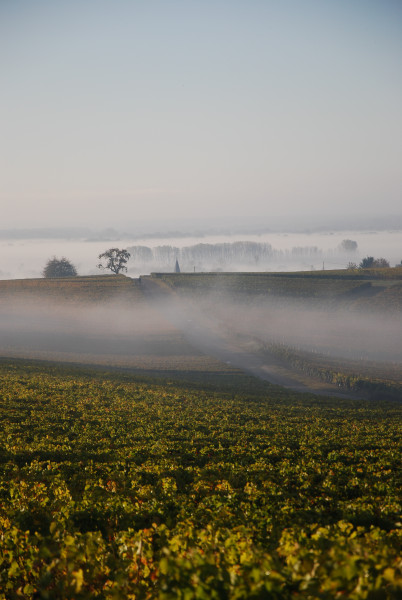 Domaine Saget Pouilly sur Loire
