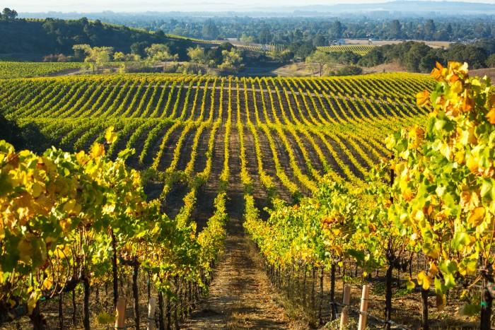 Balverne Wine