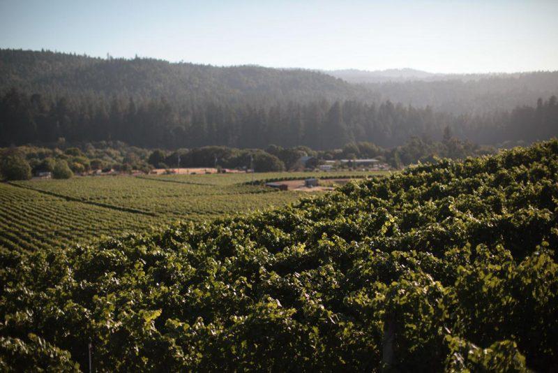 FEL Wines Savoy Vineyards