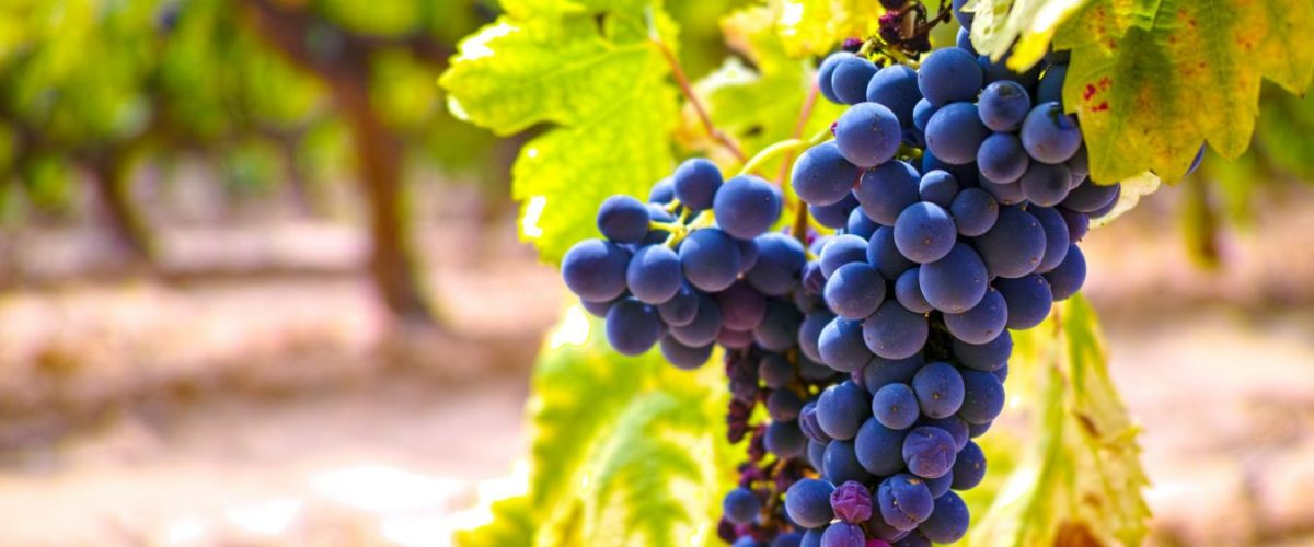 Six Great Grenache Wines From Around The Globe