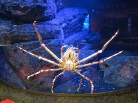 Crab?! @ Siam Ocean World, Bangkok