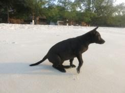 Cute black puppy on white beach