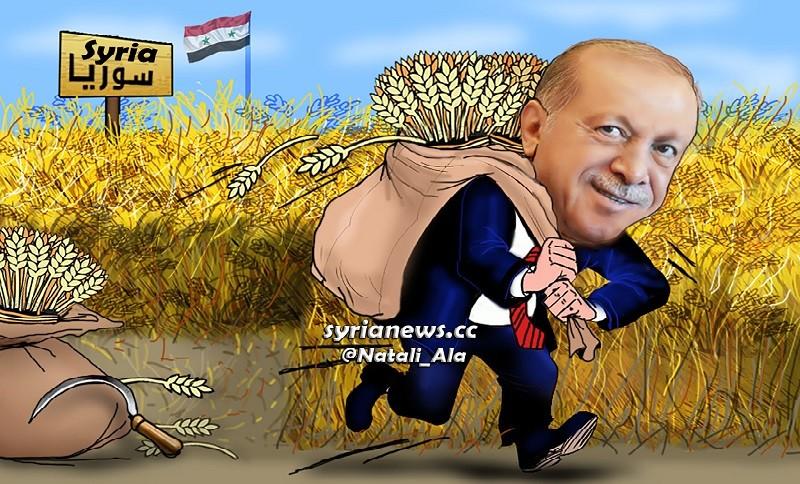 Erdogan stealing Syrian Wheat - Burning Syrian Wheat Fields