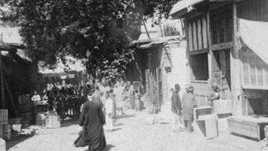 دمشق 1911 - شجرة الدلب الضخمة في سوق السروجية