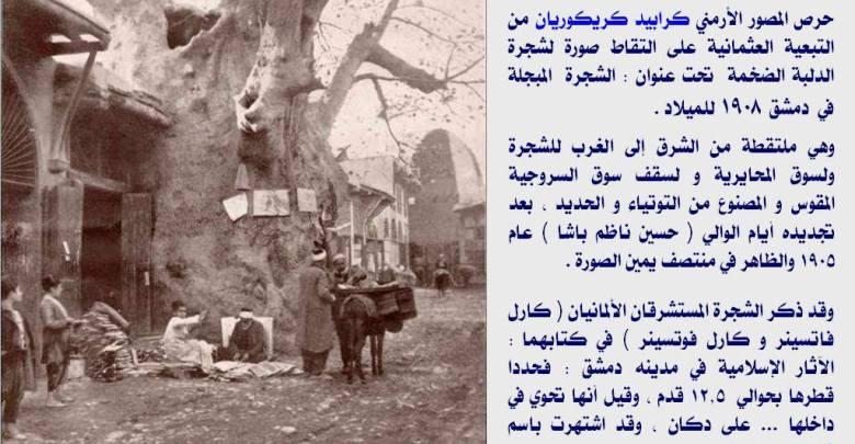 دمشق - كرابيد كريكوريان و كارل فاتسينر و كارل فوتسينر و شجرة الدلب 1908