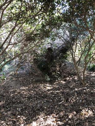 倒れた巨木を脇から抜けてる図