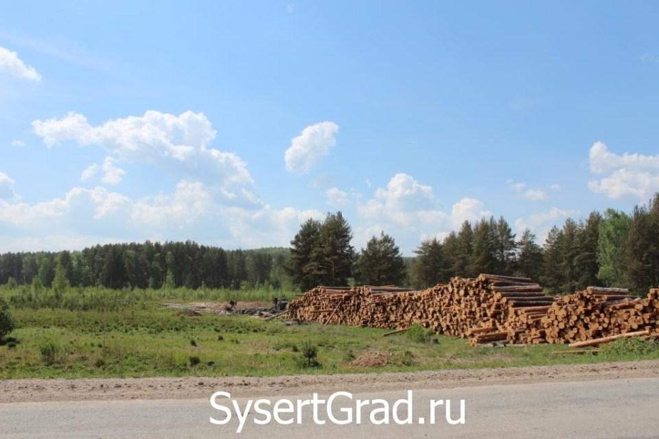 Вырубка леса в Сысерти