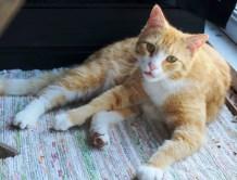Den første gjesten er kommet - Findus naboens katt!