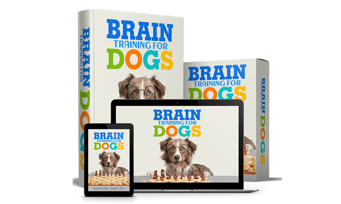 Retail Store Brain Training 4 Dogs Obedience Training Commands