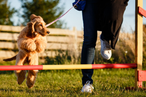 What Are Some Vital Dog Training Tips That You Must Follow