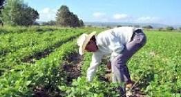 Destinarán 332 millones de pesos  en beneficio de 33 mil 500 productores del campo