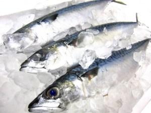 鮮度のいい魚と腐りかけの魚の見分け方の違い