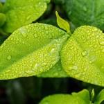 保湿か脱保湿かは酒さ様皮膚炎最大のテーマ。今の自分にどちらがいいかを考える。