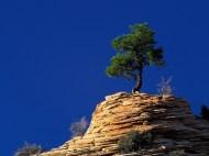 http://www.galeria_termeszet_hatterkepek.abbcenter.com/weboldal/galeria_termeszet_hatterkepek/gallery/7.Single_Pine_Tree_Atop_Sandstone.jpg
