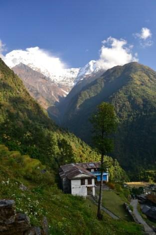 Nepal, trek to the ABC #3