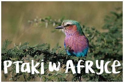 Najładniejsze zdjęcia ptaków z Afryki