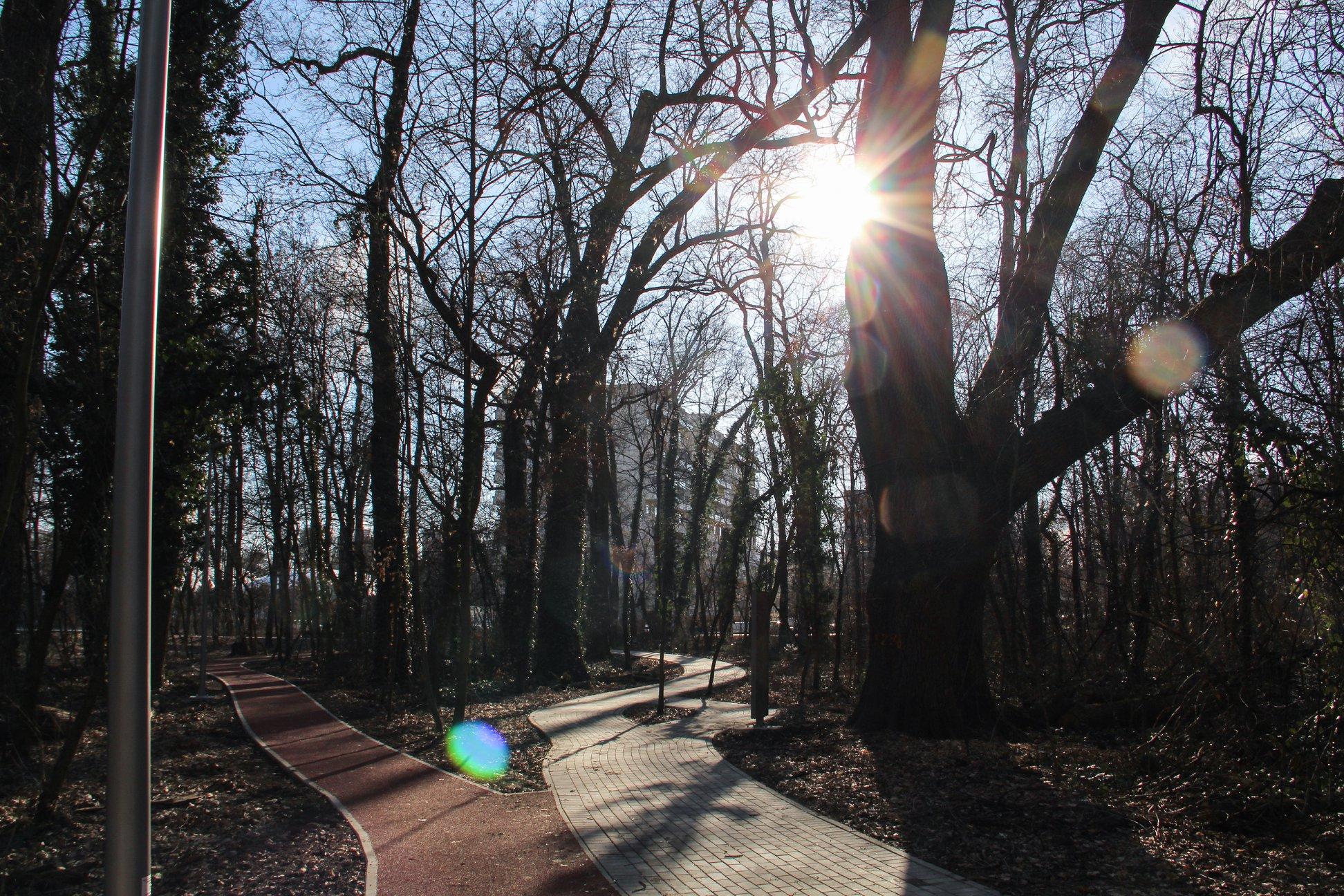 tavasz liget időjárás napsütés fák futókör rekortán