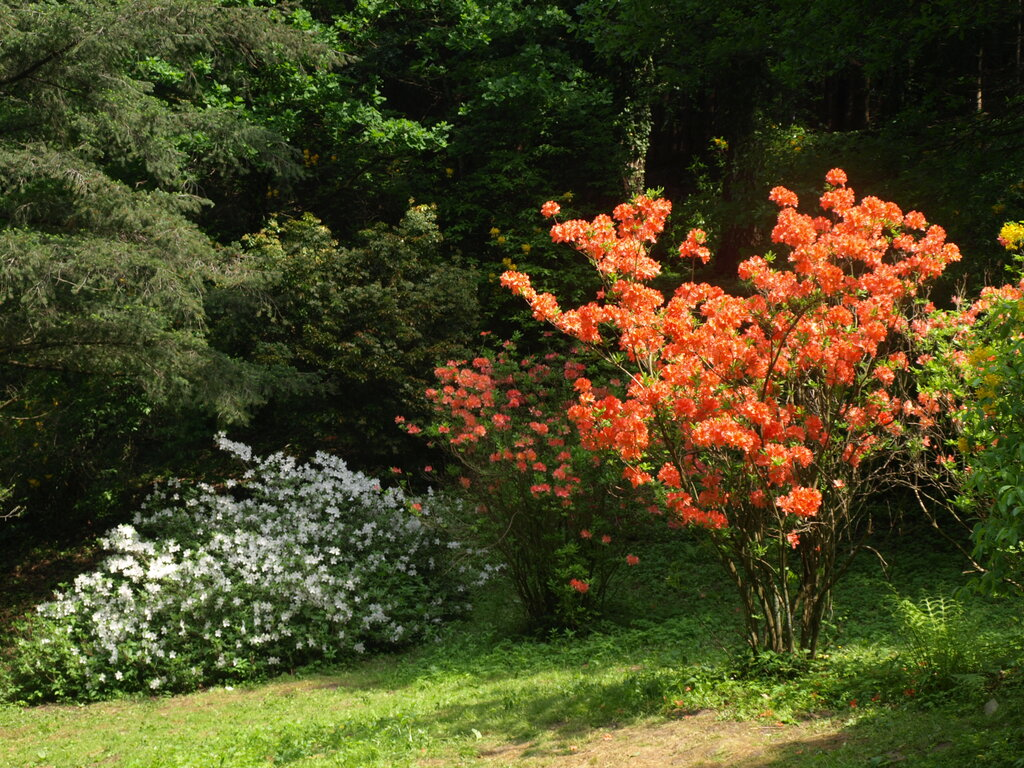 Arborétumok Napja Budafa