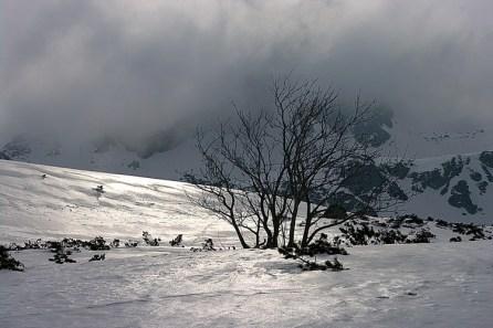 Zima w dolinie Gąsiennicowej