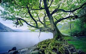 folyóvíz és fa