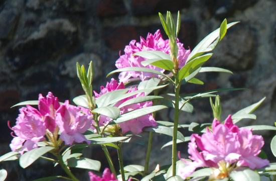 kwiatki-majowe