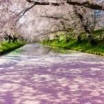 弘前さくらまつり2018開花予想と出店のおすすめは?