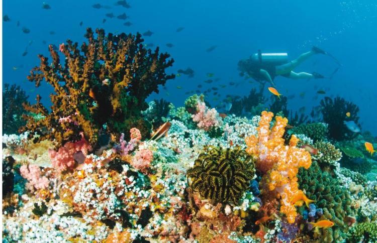 отель на мальдивах с домашним рифом