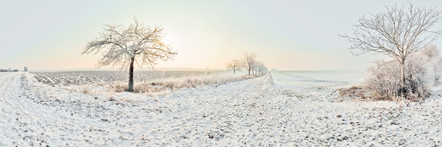 11 - Rhh_winterFeld1_1200x400-6-1420x473.jpg