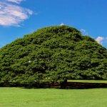木だけに気になる?物語感じる、不思議な「世界にひとつだけの木」8選
