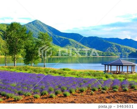 かなやま湖ラベンダー園の寫真素材 [3463631] - PIXTA