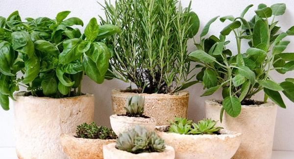 How To Grow Aromatic Herbs At Home - Which Plants To Choose?